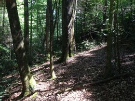 Online Only 360 acres adjoining the Big South Fork National Park in 6 tracts from 16 ac to 91 ac each featured photo 11