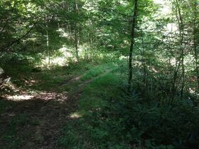 Online Only 360 acres adjoining the Big South Fork National Park in 6 tracts from 16 ac to 91 ac each featured photo 12