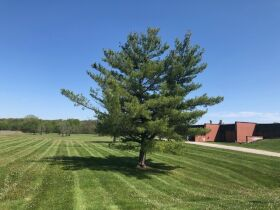 OFFICES & MULTI-VEHICLE GARAGE ON 37± ACRES, AUCTION LIVE & ONLINE featured photo 7