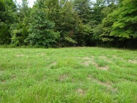 323 ACRES - TIMBER - Selling in Parcels - Online Bidding Ends TUE, SEPT 28 @ 3:00 PM CDT featured photo 1
