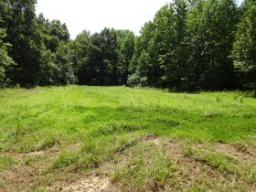 323 ACRES - TIMBER - Selling in Parcels - Online Bidding Ends TUE, SEPT 28 @ 3:00 PM CDT featured photo 4