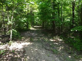 323 ACRES - TIMBER - Selling in Parcels - Online Bidding Ends TUE, SEPT 28 @ 3:00 PM CDT featured photo 5