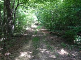 323 ACRES - TIMBER - Selling in Parcels - Online Bidding Ends TUE, SEPT 28 @ 3:00 PM CDT featured photo 6