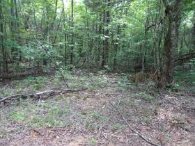 323 ACRES - TIMBER - Selling in Parcels - Online Bidding Ends TUE, SEPT 28 @ 3:00 PM CDT featured photo 7