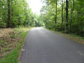 323 ACRES - TIMBER - Selling in Parcels - Online Bidding Ends TUE, SEPT 28 @ 3:00 PM CDT featured photo 12