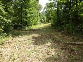 323 ACRES - TIMBER - Selling in Parcels - Online Bidding Ends TUE, SEPT 28 @ 3:00 PM CDT featured photo 10