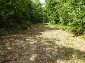 323 ACRES - TIMBER - Selling in Parcels - Online Bidding Ends TUE, SEPT 28 @ 3:00 PM CDT featured photo 11