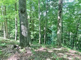 170 Acre Hunting Camp with Timber featured photo 6