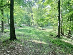 170 Acre Hunting Camp with Timber featured photo 5