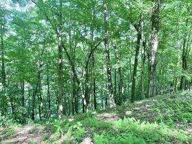 170 Acre Hunting Camp with Timber featured photo 7