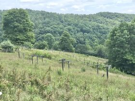 Secluded Timber Framed Home, Horse Barn, 34 Acres featured photo 12