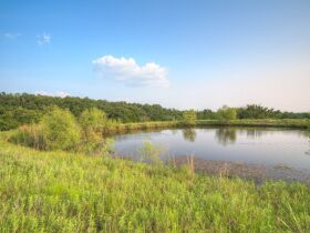 PAYNE COUNTY LAND AUCTION-160 ACRES SOUTHWEST STILLWATER/COYLE RD AREA featured photo 1