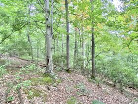 Absolute 41 Acre Gilmer County Land featured photo 2