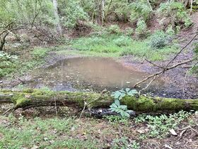 Absolute 41 Acre Gilmer County Land featured photo 3