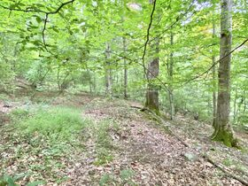 Absolute 41 Acre Gilmer County Land featured photo 4