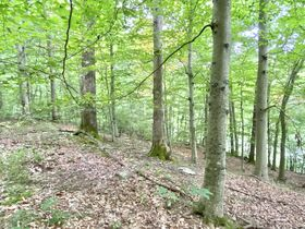 Absolute 41 Acre Gilmer County Land featured photo 5