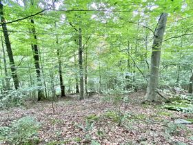 Absolute 41 Acre Gilmer County Land featured photo 6
