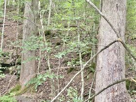 Absolute 41 Acre Gilmer County Land featured photo 9