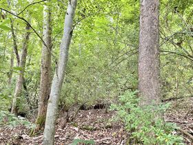 Absolute 41 Acre Gilmer County Land featured photo 12