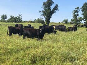 RANCH LIQUIDATION AUCTION-STILLWATER, OKLAHOMA AREA-800 CONTIGUOUS ACRES W/ CUSTOM HOME-BARNS PLUS CATTLE AND EQUIPMENT featured photo 7