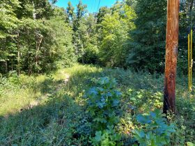 Bear Creek Resort Lots at Absolute Online Only Auction featured photo 11