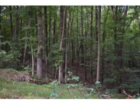153 +/- ACRES, 3 FARMS, SELLING IN 15 TRACTS; TIMBER & FARM EQUIPMENT featured photo 6