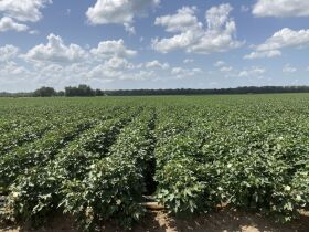 Craighead County ~Farm Land Auction ~ Selling Regardless of Price featured photo 2