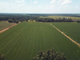 Estate Auction | 168 ± Acres & Home | Southern Turner Co. featured photo 6