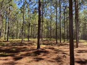 Estate Auction | 168 ± Acres & Home | Southern Turner Co. featured photo 3