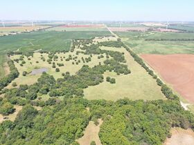 311 Acres, SE Sumner Co KS: Tillable | Pasture | Hunting Potential featured photo 5