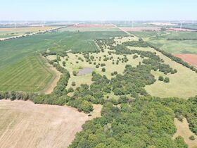 311 Acres, SE Sumner Co KS: Tillable | Pasture | Hunting Potential featured photo 6