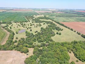 311 Acres, SE Sumner Co KS: Tillable | Pasture | Hunting Potential featured photo 8