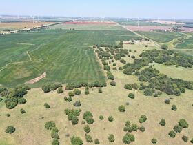 311 Acres, SE Sumner Co KS: Tillable | Pasture | Hunting Potential featured photo 10