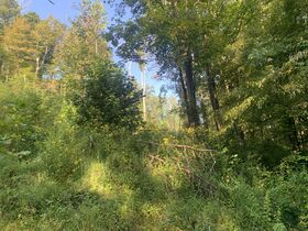 29 Acre Barbour County Land Auction featured photo 2