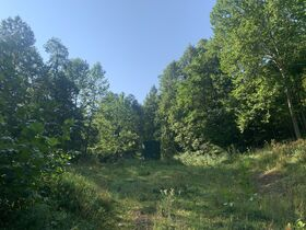 29 Acre Barbour County Land Auction featured photo 5