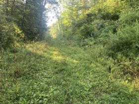 29 Acre Barbour County Land Auction featured photo 1