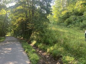 29 Acre Barbour County Land Auction featured photo 3