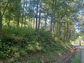 29 Acre Barbour County Land Auction featured photo 4