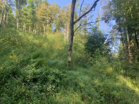 29 Acre Barbour County Land Auction featured photo 6