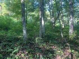 29 Acre Barbour County Land Auction featured photo 8