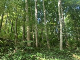 29 Acre Barbour County Land Auction featured photo 9