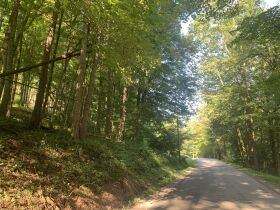 29 Acre Barbour County Land Auction featured photo 10