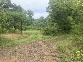 Absolute 41 Acre Harrison County Land & Cabin featured photo 1