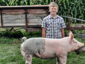 2021 Tuscarawas County Fair Jr Livestock Auction featured photo 12