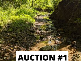 Holmes County Land Auctions- 27.74 Acres in 3 Locations featured photo 3
