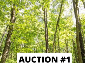 Holmes County Land Auctions- 27.74 Acres in 3 Locations featured photo 4