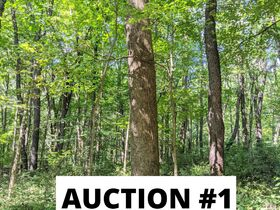 Holmes County Land Auctions- 27.74 Acres in 3 Locations featured photo 5