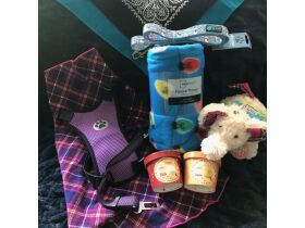 Warrick Humane Society Fall Online Benefit Auction featured photo 8