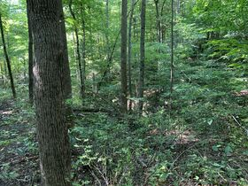 Absolute Berlin Area Land Auction featured photo 9