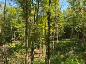 Northern Perry Co. Land Auction * 80 Acres sells Absolute featured photo 6